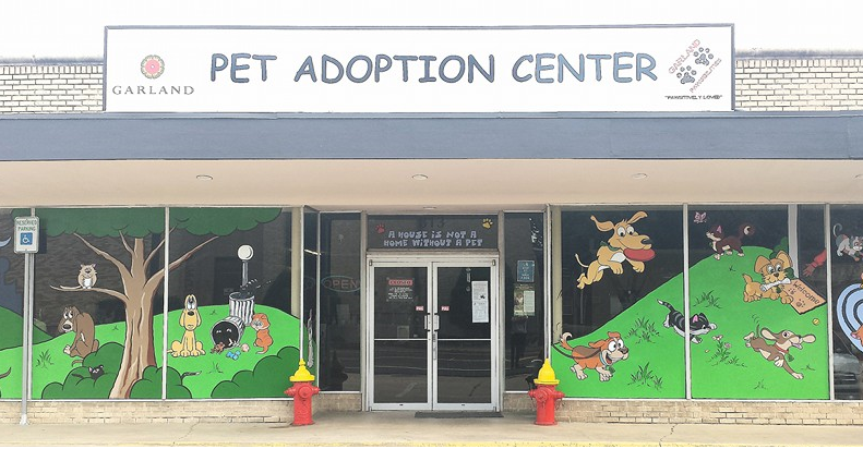 Pet Adoption Center with Dogs Painted on the Window