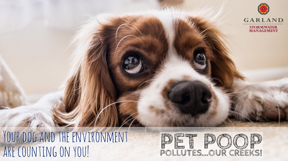 Pet Poop Pollutes Our Creeks