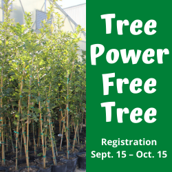Tree Power Free Tree - Square 250x250